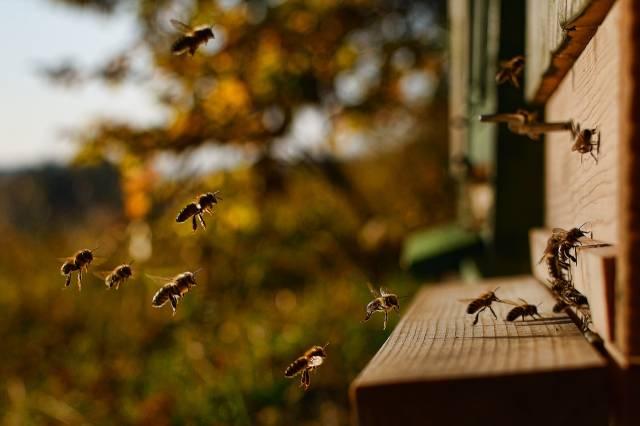 choisir une ruche