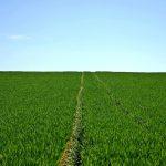 agriculture de précision