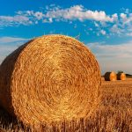 ecole-d-agriculture-france-paille
