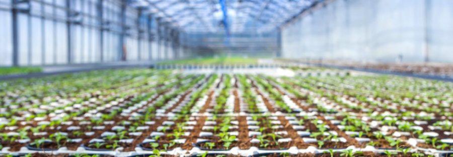 les-ecoles-agriculture-agronomie-france
