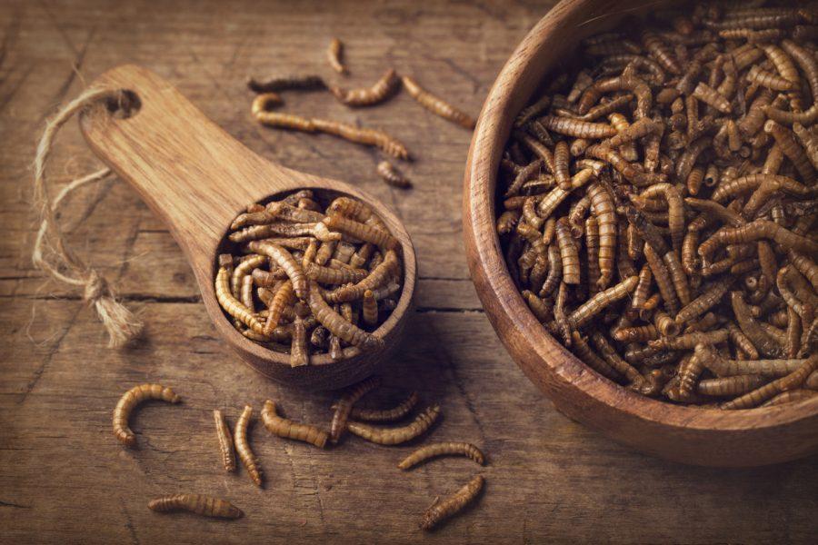 Des insectes dans un bol et dans une cuillère en bois